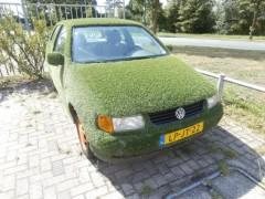 Volkswagen Polo - DECORATIE GRAS AUTO